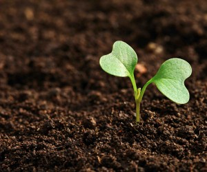 Plant-the-seed-small