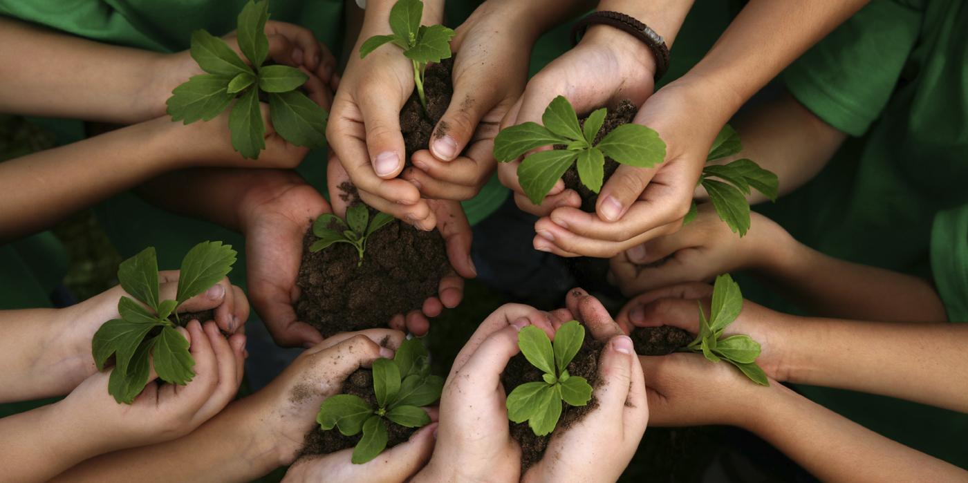 handsplants(crop)