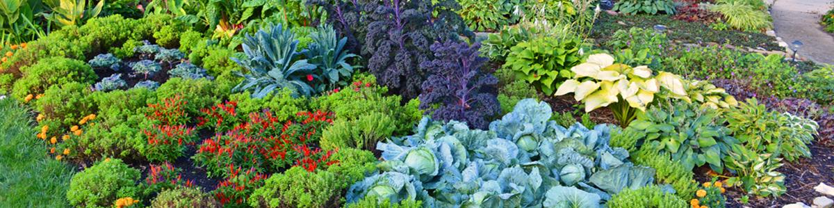 garden-crop